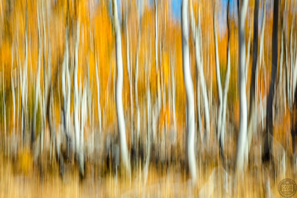 """""""Autumn Abstract 2"""" Photograph of Aspen trees at Paige Meadows, near Lake Tahoe in the fall. The abstract effect is achieved by intentional camera movement while hand holding the camera."""