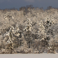 """""""After the Storm""""<br /> Sunrise illuminates the forest after a winter storm at Walden Pond.  Winter views of Walden Pond."""