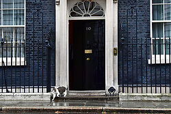 Larry the cat outside 10 Downing Street, London, as the cabinet meets over Brexit.