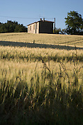 house in a wheat filed
