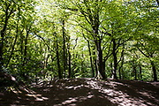 Walking paths and tracks under the trees at Egypt Woods, with the sun shining through the leaves in Jersey, CI