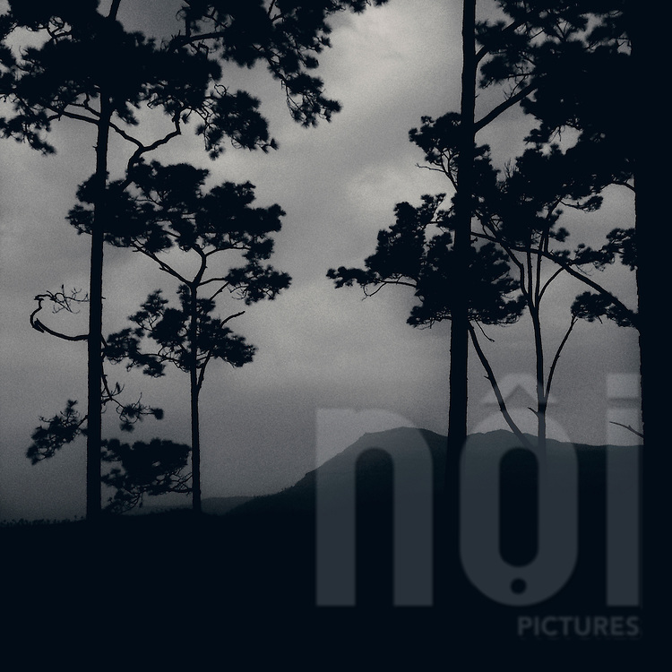 Trees silhouette in a forest close from Phu khao kwai, Nam ngum Lake, Vientiane province, Laos, Asia