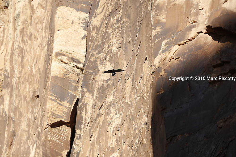 SHOT 10/18/16 4:20:36 PM - Emery County Utah tourism photos including hiking and exploring Goblin Valley including an arch rappel, the Black Dragon Canyon and  mountain biking Saucer Basin with Lamar Guymon. (Photo by Marc Piscotty / © 2016)