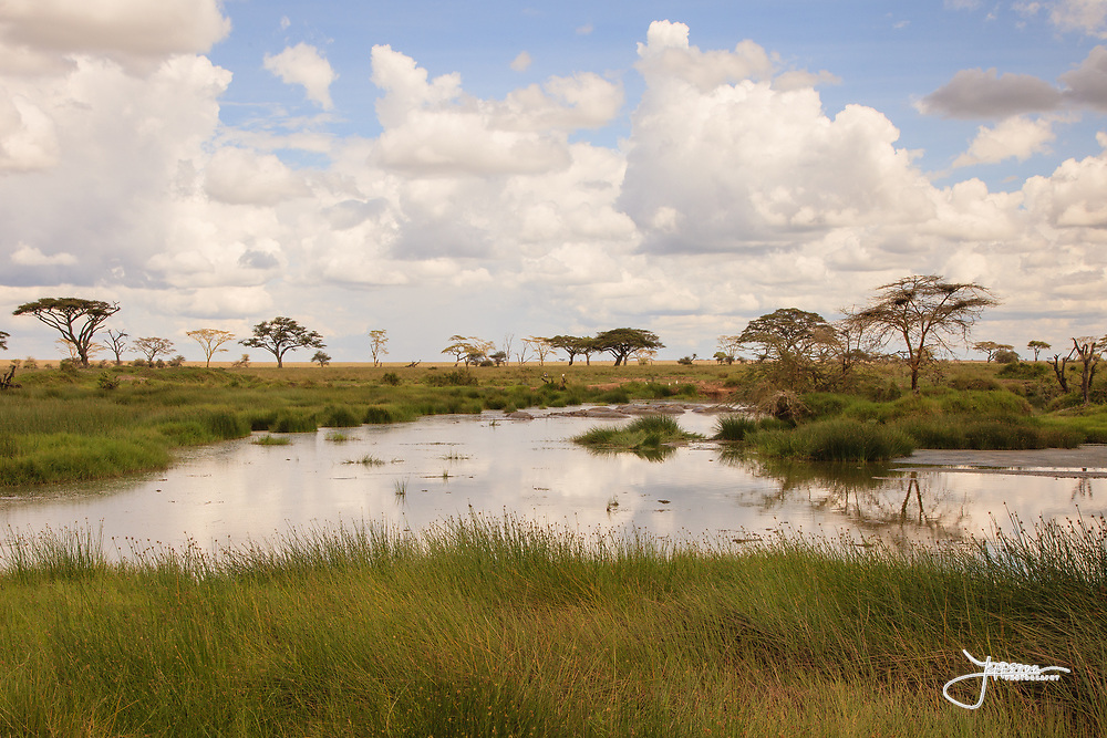 Hippos in Central Serengeti