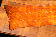 """The skin of the sturgeon can be cured curried curry currying to make a leather like product  """"Caviar et Prestige"""" Saint Sulpice et Cameyrac  Entre-deux-Mers  Bordeaux Gironde Aquitaine France - at Caviar et Prestige"""
