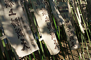Nobori banners at Tsurugaoka Hachiman_Gu shrine. Kamakura, Japan