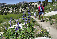 The 164-mile long Tahoe Rim Trail is nearing completion and will circumvent Lake Tahoe.  All but two miles are left to be done and much of the trail gets havy use already.  A section of the trail from the Mt. Rose Highway south is a popular section for both hiking and mountain biking.