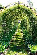 A rose bush tunnel in the garden  Chateau Kirwan, Cantenac  Margaux  Medoc  Bordeaux Gironde Aquitaine France