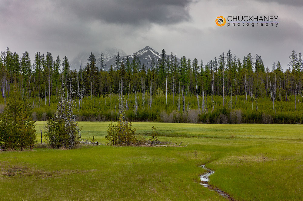 McGee Meadow on a cloudy day in Glacier National Park, Montana, USA