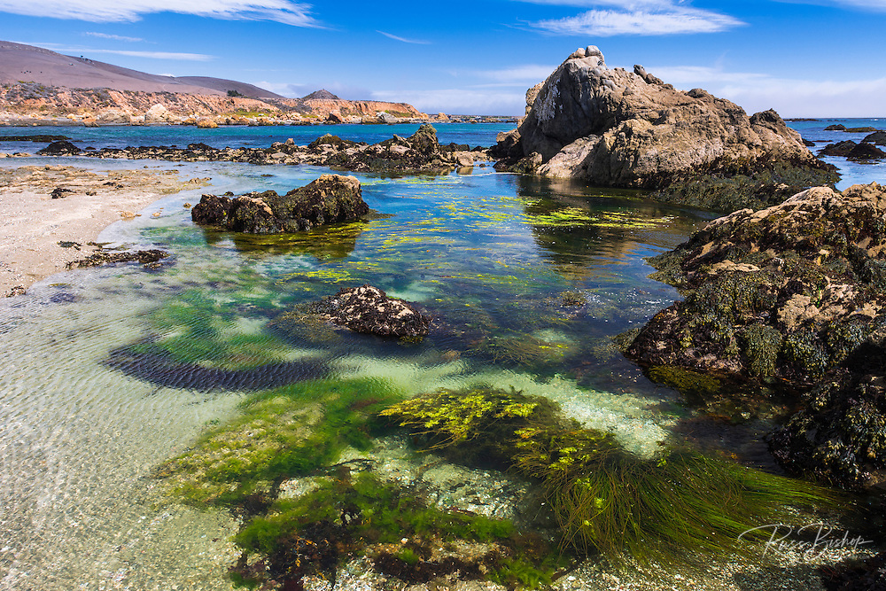 Tide pools at Estero Bluffs State Park, Cayucos, California USA