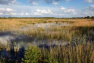 30-04-2020: Wolvega, Weststellingwerf - Natuurgebied langs de Steenwijkerweg
