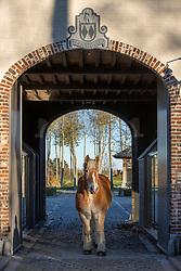 Palm paarden, Jambon Bert, BEL<br /> Stoeterij Diepensteyn - Steenhuffel  2020<br /> © Hippo Foto - Dirk Caremans<br /> 18/11/2020