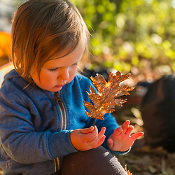A young girl plays with an oak leaf outside her family's tent on Lanes Island in Casco Bay. Yarmouth, Maine.