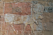 EGYPT, THEBES, WEST BANK Temple of Hatshepsut, Hathor (cow)