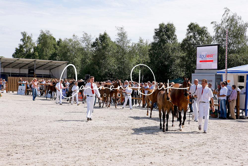 Foal overview<br /> KWPN Paardendagen Ermelo 2010<br /> © Dirk Caremans