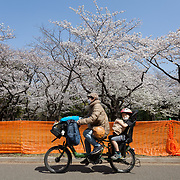 2021 Hanami Restrictions During COVID-19