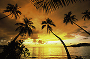 Sunset with palms, Fiji<br />