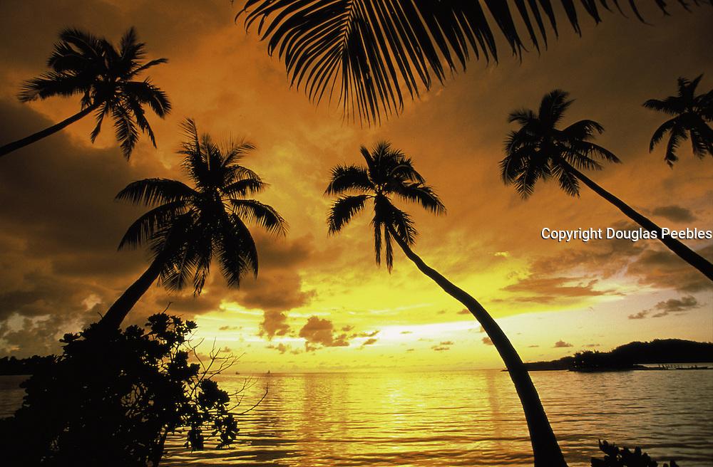 Sunset with palms, Fiji<br />