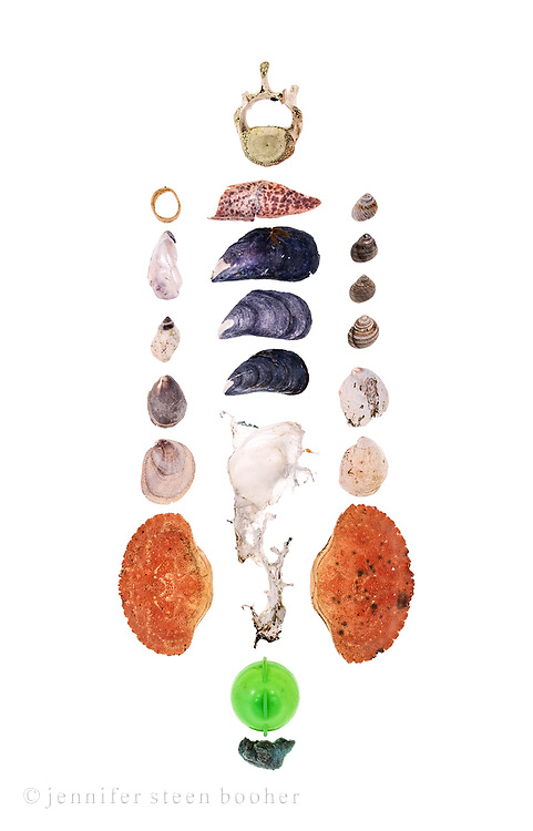 Top to bottom, left to right:<br /> Row 1: lobster claw band, Blue Mussel nacre (Mytilus edulis), Dog Whelk (Nucella lapillus), 2 Common Slipper Shells (Crepidula fornicata), Jonah Crab (Cancer borealis) <br /> Row 2: seal vertebra [probably Harbor Seal (Phoca vitulinaI but possibly Gray Seal (Halichoerus grypus)], lobster leg segment (Homarus americanus), 3 Blue Mussels, partially melted fragment of plastic bag, hollow plastic object (possibly part of fishing float], fragment of styrofoam<br /> Row 3: 4 Common Periwinkle (Littorina littorea), 2 Slipper Shells, Jonah Crab