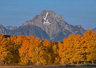Aspens show off their burnt gold color beneath the Skillet glacier and Mt. Moran.