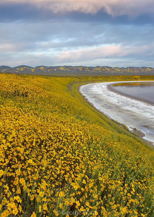 Goldfields and Clouds along Soda Lake, Carrizo Plain National Monument, California
