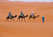 Morocco - Camel caravan across the Sahara