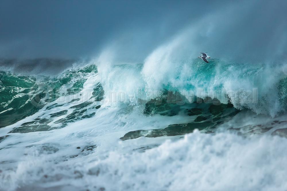 It is fascinating to see the seagulls how they approaches the waves, and sometimes they just disappear in the water. | Det er fasinerende å se hvor nært måkene skal fly ved storbåra. Av og til bare forsvinner de i vannmassene.
