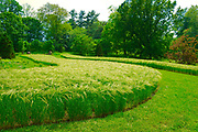Oats field, Chanticleer Gardens, Wayne, PA