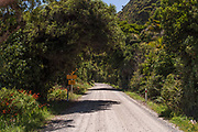 A stretch of the Gravel Road in the Karamea area.
