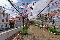 An arbor of Bougainvillea (flowering plants) on the Paseo de Las Bovedas, Casco Viejo (Old City), San Felipe, Panama City, Panama