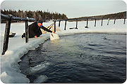 """The sad journey of the Russian beluga Whale's from sea to human captivity<br /><br />A team of specialists that every year are issued with licenses to catch dolphins/White Whales from the sea and train them, Nilmoguba, a small village on the north of Russia, near the Polar Circle.<br /><br />This whale (pictured )has been caught at sea, it is trained by specialists not to be afraid of humans for about half a year, and after that he will be transferred to live in circus or aquapark / dolphinaruim<br /><br />The beluga whale named Petrovich, was caught in late autumn, and four months later he had become accustomed to people and feeding in captivity. <br /><br />The Centre informed us (in January 2013) than from autumn 2013 they've got 2 licenses to catch whales, and before catching new whales, this dolphin named Petrovich will have new home in Moscow,  After that they will get two new whales (younger animals are more preferable, because they are easier adapts with people) and train them. Petrovich, who is 12 years old, they live for about 25-30 years, Petrovich adapted to people very easily, and trainers were really surprised with that fact. <br /><br />Each dolphin has its own character. Of the hundreds of captured about 1-2 do not surive in captivity and refuse to eat food brought given to them, f they do not adapt, because stressful experiences they die very quickly.<br /><br />Despite the fact that in nature, they have no natural enemies (only polar bear could, perhaps, be compared with him by force, but in reality they do not interact well at first,  you have to learn there trust before you have contact with them , <br /><br />Maria a worker at the centre says that she was feeding dolphins until they where fall twice a day, and in winter - three times, while the total number of fish per day did not change, ie Each serving has become a little less. <br /><br />Petrovic will soon be sent to the Dolphinarium. He will not """"participate in the show,"""" but it will not pr"""