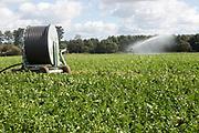 Irrigation sprayer watering field of crops near Tunstall, Suffolk, England, UK