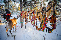 Reindeer harnesses for sledding