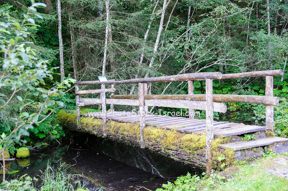 wooden bridge in a lush forest. Photographed in Tirol Austria.