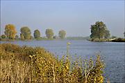 Nederland, Batenburg, Ravenstein, 23-10-2016Bakenbomen langs de rivier de Maas  gaan verdwijnen door het uitsterfbeleid van Rijkswaterstaat.  Bij hoog water zijn de bomen een hulpmiddel voor navigatie, een baken voor de schippers. De Maasoevers moeten volgens RWS vrij zijn van obstakels en dus worden de bomen niet meer vervangen . Deze bakenbomen zijn karakteristiek voor het landschap langs de Maas . De Maas krijgt de ruimte. Door de aanleg van natuurvriendelijke oevers ontstaat er een geleidelijke overgang van water naar land. Veel bewoners in het stroomgebied zijn teleurgesteld over dit beleid .Foto: Flip Franssen