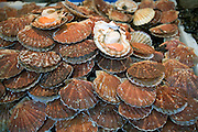 Sea scallops in their shells, called Coquilles St. Jacques in France (shells of St. James), for sale in the weekend market in Neuilly, France. (Supporting image from the project Hungry Planet: What the World Eats.)