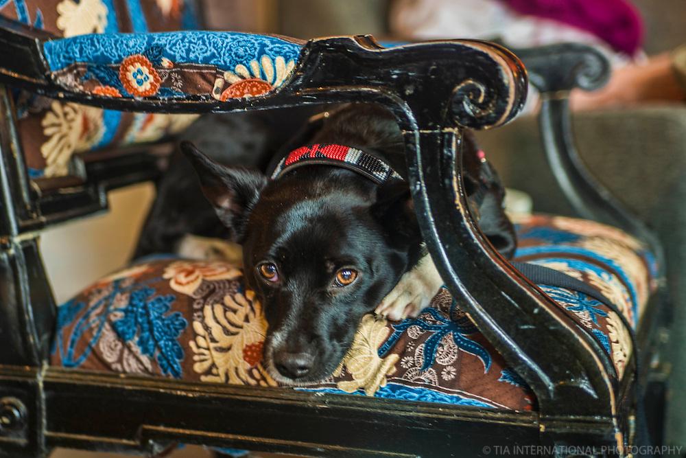 MAY 17th:  A Dog Named Doris