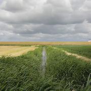 Nederland Walsoorden   gemeente Hulst  19 juni 2010 20100619      .. Serie landschappen provincie Zeeland. Zeeuws-Vlaanderen, landschap polderlandschap scenery met op de achtergrond de dijk van de westerschelde.   wisselvallig veranderlijk weer. Op de voorgrond een watergang met rietkraag, riet. Illustratief beeld  waterveiligheid, hollandse landschappen en luchten. , stock, stockbeeld, streek, sunny, sustainable, terrein, typerend, typical dutch landscape, typisch hollands, typisch hollands landschap, typische, uitgestrektheid, uitzicht, uniek, unieke, veiligheid, veld, vergezicht, vergezichten, verte, vrij, vrijheid weer, waaien, water level, waterbeheer, Waterbeheerplan, watergang, waterhuishouding, waterkering, Waterkeringen, waterkeringen, waterlevel, watermanagement, waterniveau, waterpeil, waterplan, waterproblematiek, waterstaatkundige, waterstand, watersysteem, waterveiligheid, waterveiligheid en gebiedsontwikkeling, waterwerken, weersomstandigheden, wei, weide, weidegang, weiland, weiland. Landscape, wijdheid, wijds, wijdsheid, wind, wit, witte, wolk, wolken, wolkenpartij, zeeland, zeeuws vlaanderen, zeeuws-vlaanderen, zeewering, zo vrij als een vogel, zonnig, zonnige dag, zware, zwitserleven gevoel  ..Foto: David Rozing