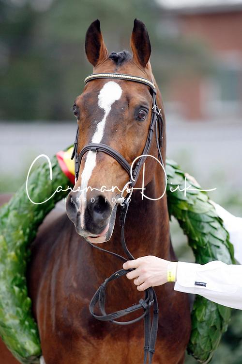 Heartbreaker<br /> BWP Hengstenkeuring Oud Heverlee 2007<br /> Photo © Hippo Foto