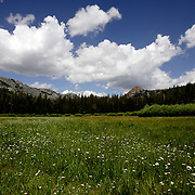 A view of Agnew Meadow from the Shadow Lake Trail in the Ansel Adams Wilderness.