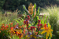 Ricinus communis (Castor oil plant) with Hedychium (ginger) in the background at Glebe Cottage