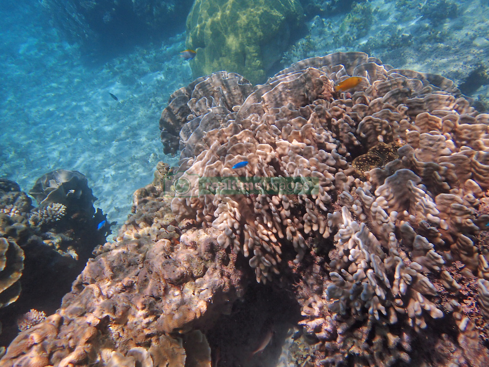 June 3, 2017 - Philippines - Due to global warming and climate change, coral bleaching is visible in Apo reef, the world's second largest coral atoll. (Credit Image: © Sherbien Dacalanio/Pacific Press via ZUMA Wire)
