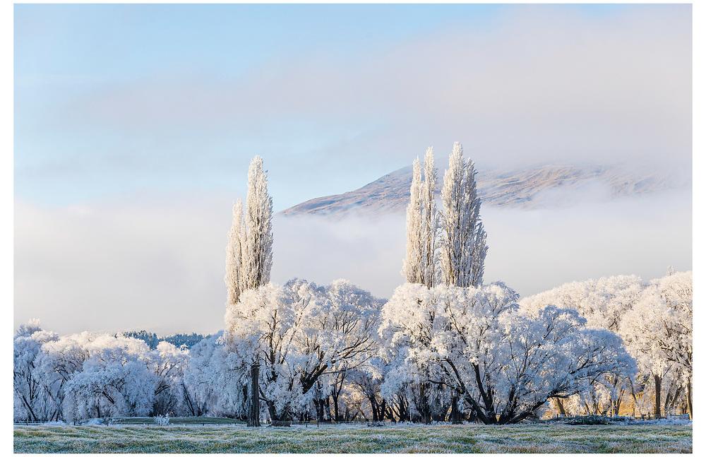 Hoar Frost, Cardrona Valley RD, Wanaka. Otago.