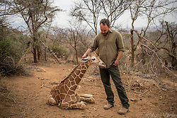 "Dave Matthews (@davematthewsband) meets ""Shorty"" or ""Fupi"" in Swahili, one of the orphaned reticulated #giraffes being cared for by the team at the Reteti Elephant Sanctuary (@r.e.s.c.u.e) where he will be rehabilitated and returned to the wild. Sarara has already returned three giraffes to the wild recently but each time a new orphan arrives, out of the blue, the former orphans, who are all grown up and living in the wild, come back to the sanctuary to greet the new orphans as soon as they arrive. They must have some way of communicating and knowing these babies are there.<br /> <br /> Reteti Elephant Sanctuary, in northern Kenya is the first ever community-owned and run elephant sanctuary in Africa. The sanctuary provides a safe place for injured elephants to heal and later, be returned back to the wild. You can support this incredible place and the people who protect wildlife. Make a $10 contribution in support of Reteti for a chance to win a trip to Kenya, see Dave Matthews in concert and take home Dave's guitar with @prizeo (Link in profile). Not only will you be helping care for orphaned baby elephants and strengthening community ties, you'll also have a chance to win a life-changing trip to see the sanctuary in person. The first $10,000 in funds raised will be generously matched by Elephant Gems (@elephantgems).<br /> <br /> Reteti operates in partnership with Conservation International (@conservationorg) who provide critical operational support and work to scale the Reteti community-centered model to create lasting impacts worldwide. <br /> <br /> Photo by @amivitale."
