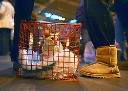 © Licensed to London News Pictures. 24/11/2012. Birmingham, UK Owners wait for the kitten judging competition. Cats are shown by their owners and breeders at The Supreme Cat Show held by the Governing Council of Cat Fancy at the National Exhibition Centre in Birmingham today, 24 November 2012. The Cat Show is one of the largest cat contests in Europe with over one thousand cats being exhibited and judged. Photo credit : Stephen Simpson/LNP