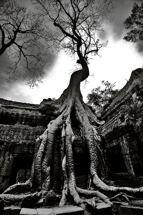 This image of a tree growing out of the ruins is from Preah Khan located just outside the Angkor Thom city in Angkor Wat, Siem Reap, Cambodia.<br /> <br /> Built in the 12th Century Preah Khan was dedicated to the father of king Jayavarman VII so is sometimes known as Father Temple.<br /> <br /> The temple was a city in its own right. It was a place of festivals with over 1000 Apsaras or celestial dancers performing 18 times per year.<br /> <br /> It is largely un-restored with trees overgrowing the ruins in many parts and many narrow passages and secret chambers.<br />  <br /> Preah Khan or Temple of the Sacred Sword  is the second largest temple enclosure in Angkor. <br /> <br /> The ruins of Angkor, a UNESCO World Heritage Site with temples numbering over 1000, are hidden amongst forests and farmland to the north of the Tonle Sap Lake outside the modern city of Siem Reap, Cambodia.  Angkor served as the seat of the Khmer empire and flourished from approximately the 9th century to the 13th century. <br /> <br /> Quite a few of the temples at Angkor have been restored and represent a most magnificent site of Khmer architecture including the world's largest single religious monument, the breathtaking Angkor Wat.<br /> <br /> After its decline and abandonment. Preah Khan was rediscovered and restored in the late 19th century.