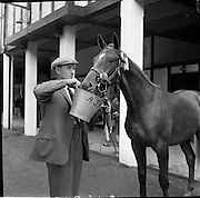 07/08/1962 <br /> 08/07/1962 <br /> 07 August 1962 <br /> Dublin Horse show at the RDS, Ballsbridge, Dublin, Tuesday. Image shows Mr Adam J. kelly, Downpatrick, Co. Down, feeding his colt, that won the Perpetual Challenge Cup for best Thoroughbred Yearling Gelding.