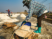 10 FEBRUARY 2016 - BAN LAEM, PHETCHABURI, THAILAND: Salt field workers gather salt from an evaporated field at the beginning of the salt harvest in Phetchaburi province, Thailand. The salt harvest in Thailand usually starts in February and continues through May. Salt is harvested in many of the provinces along the coast, but the salt fields in Phetchaburi province are considered the most productive. The salt fields are flooded with sea water, which evaporates off leaving salt behind. Salt production relies on dry weather and producers are hoping the current drought will mean a longer harvest season for them.      PHOTO BY JACK KURTZ