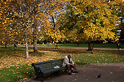 Autumn in Green Park, London. Trees during the fall season discolour, turning yellow and brown before dropping. With low light this makes for a beautiful time of year.