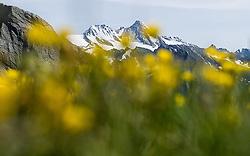 THEMENBILD - Nationalpark Hohe Tauern ist der groesste Nationalpark Oesterreichs und umfasst Teile des zentralalpinen Hauptkamms der Ostalpen. Das Bild wurde am 04. Julii 2014 aufgenommen. im Bild Grossglockner (3798 m) und Glocknerwand hinter gruener Wiese und Trollblumen (Butterblume) lateinisch Trollius europaeus // THEMES PICTURE - High Tauern National Park, which is the largest National Park in Austria. The High Tauern are a mountain range on the main chain of the Central Eastern Alps. The image was taken on july, 04th, 2014. Picture shows Grossglockner, the highest mountain of austria behind green meadows and globeflowers, AUT, EXPA Pictures © 2014, PhotoCredit: EXPA/ Michael Gruber